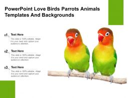 Powerpoint Love Birds Parrots Animals Templates And Backgrounds