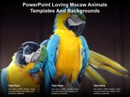Powerpoint Loving Macaw Animals Templates And Backgrounds