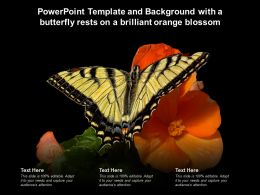 Powerpoint Template And Background With A Butterfly Rests On A Brilliant Orange Blossom