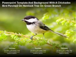 Powerpoint Template And Background With A Chickadee Bird Perched On Hemlock Tree On Green Branch