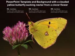Powerpoint Template And Background With A Clouded Yellow Butterfly Sucking Nectar From A Clover Flower