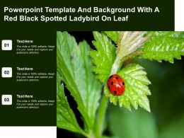 Powerpoint Template And Background With A Red Black Spotted Ladybird On Leaf
