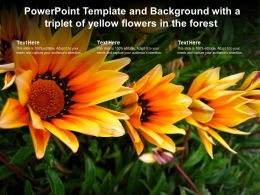 Powerpoint Template And Background With A Triplet Of Yellow Flowers In The Forest