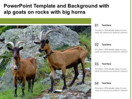Powerpoint Template And Background With Alp Goats On Rocks With Big Horns