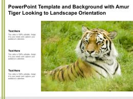 Powerpoint Template And Background With Amur Tiger Looking To Landscape Orientation