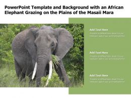 Powerpoint Template And Background With An African Elephant Grazing On The Plains Of The Masaii Mara