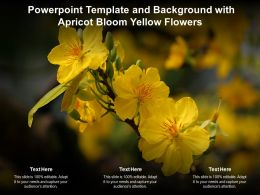 Powerpoint Template And Background With Apricot Bloom Yellow Flowers