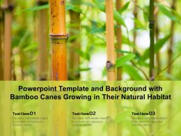 Powerpoint Template And Background With Bamboo Canes Growing In Their Natural Habitat