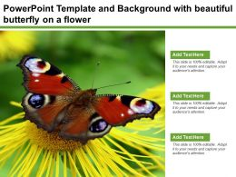 Powerpoint Template And Background With Beautiful Butterfly On A Flower
