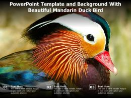 Powerpoint Template And Background With Beautiful Mandarin Duck Bird