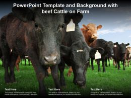 Powerpoint Template And Background With Beef Cattle On Farm
