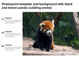 Powerpoint Template And Background With Black And Brown Panda Cuddling Animal