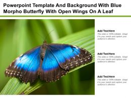 Powerpoint Template And Background With Blue Morpho Butterfly With Open Wings On A Leaf
