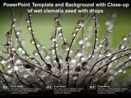 Powerpoint Template And Background With Close Up Of Wet Clematis Seed With Drops
