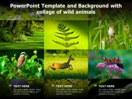 Powerpoint Template And Background With Collage Of Wild Animals