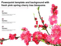Powerpoint Template And Background With Fresh Pink Spring Cherry Tree Blossoms