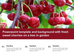 Powerpoint Template And Background With Fresh Sweet Cherries On A Tree In Garden