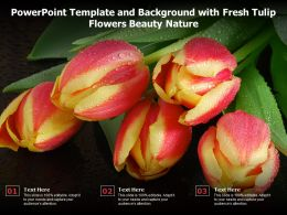 Powerpoint Template And Background With Fresh Tulip Flowers Beauty Nature