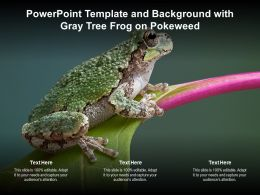 Powerpoint Template And Background With Gray Tree Frog On Pokeweed