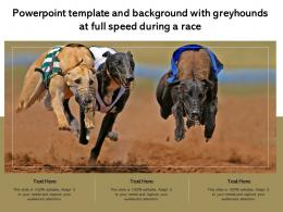 Powerpoint Template And Background With Greyhounds At Full Speed During A Race