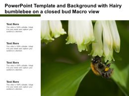 Powerpoint Template And Background With Hairy Bumblebee On A Closed Bud Macro View