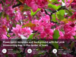 Powerpoint Template And Background With Hot Pink Blossoming Tree In The Center Of Town