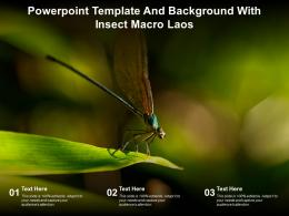 Powerpoint Template And Background With Insect Macro Laos