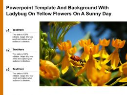 Powerpoint Template And Background With Ladybug On Yellow Flowers On A Sunny Day
