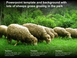Powerpoint Template And Background With Lots Of Sheeps Grass Grazing In The Park