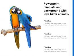 Powerpoint Template And Background With Love Birds Animals