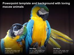 Powerpoint Template And Background With Loving Macaw Animals