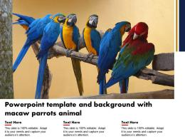 Powerpoint Template And Background With Macaw Parrots Animal