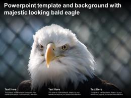 Powerpoint Template And Background With Majestic Looking Bald Eagle
