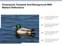 Powerpoint Template And Background With Mallard Reflections