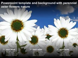 Powerpoint Template And Background With Perennial Aster Flowers Nature