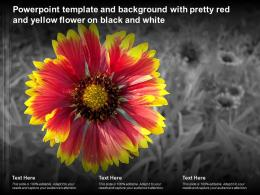 Powerpoint Template And Background With Pretty Red And Yellow Flower On Black And White