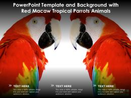 Powerpoint Template And Background With Red Macaw Tropical Parrots Animals