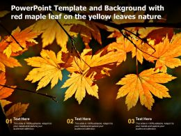 Powerpoint Template And Background With Red Maple Leaf On The Yellow Leaves Nature