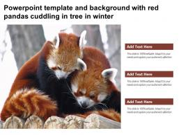 Powerpoint Template And Background With Red Pandas Cuddling In Tree In Winter
