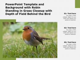 Powerpoint Template And Background With Robin Standing In Grass Closeup With Depth Of Field Behind The Bird