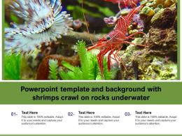 Powerpoint Template And Background With Shrimps Crawl On Rocks Underwater