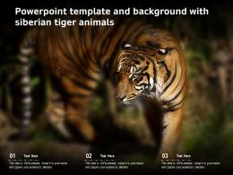 Powerpoint Template And Background With Siberian Tiger Animals