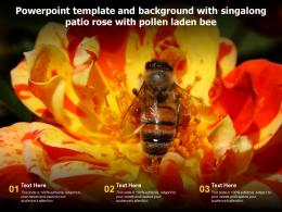 Powerpoint Template And Background With Singalong Patio Rose With Pollen Laden Bee