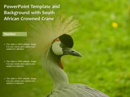 Powerpoint Template And Background With South African Crowned Crane Bird Beauty