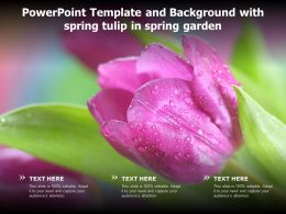 Powerpoint Template And Background With Spring Tulip In Spring Garden