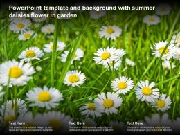 Powerpoint Template And Background With Summer Daisies Flower In Garden
