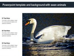 Powerpoint Template And Background With Swan Animals