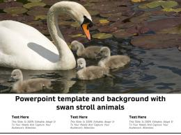 Powerpoint Template And Background With Swan Stroll Animals