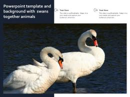 Powerpoint Template And Background With Swans Together Animals
