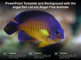 Powerpoint Template And Background With The Angel Fish Let Our Angel Fish Animals
